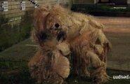 TV3 VIDEO KOHUTAVAST JÕHKRUSEST: Loomakaitsjad päästsid omaniku käest näljutatud ja raskete tervisehäiretega koera