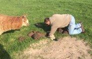 ARMAS VIDEO: Pisike alpakapoeg päästetakse august