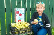 Kert ja õunad