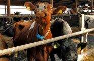 Piimakarjakasvatusettevõte VIRAITO OÜ