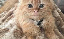 VAATA, kui armas: kass, kelle nägu on pidevalt naerul