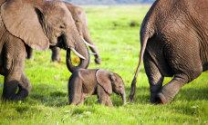Miks peaks igaüks keelduma elevandi seljas sõitmast