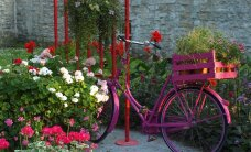 Pildid näituselt ehk palukesi lillefestivalilt