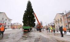 ФОТО: В Кохтла-Ярве установили новогодние елки
