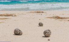 """""""Bermuda kolmnurga"""" uus nuhtlus - õlised haisvad liivakerad uhutakse kaldale"""