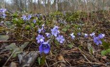Kevadine mets kutsub
