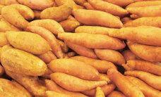 Uus uuring: kanapimeduse vastu aitavad hästi maguskartulid