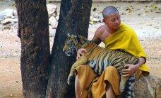 Tinderi tiigrimees ja elevandiratsanik