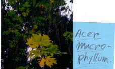 Rogowi arboreetum on üks põhjatu varaauk