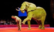 Loomatsirkusi piirava seaduse eelnõu saadeti kooskõlastusringile