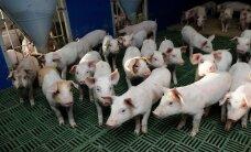 ВТО поддержала ЕС в споре с Россией об экспорте свинины