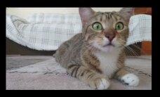 HITTVIDEO: Õudusfilmi jälgiv kassipoeg paneb kõik emotsioonid mängu