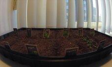 Time-lapse VIDEO: Maitserohelise kasvamine 14 päeva jooksul
