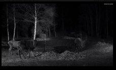 FOTO: Hirvekaamera ette jäi kummaline karvane hirv