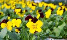 Открылось первое в Прибалтике интернет-садоводство