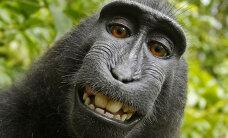 Kohtuasi: Ahvil peab olema autoriõigus enda tehtud selfie'le