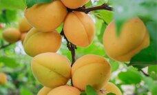 Россия разрешила импорт фруктов из Турции