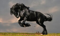 """TARKUSE TAGAVARAST: Kes või mis on """"must hobune""""?"""