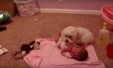 Armas VIDEO: Pisike koer kaitseb beebit hirmuäratava fööni eest