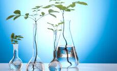 Põnev taimede alkeemia: mis on spagüüriline meditsiin ja hüdrosoolide destillatsioon?