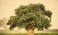 Выбрано дерево года в Европе