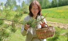 Taimetark Metsamoor hakkab Eesti esimest ravimtaime-eliksiiri tootma