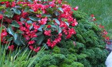 IDEE: Isevärki naabrid lillepeenras