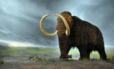 Viinis leiti maanteed ehitades igivanad mammutikihvad
