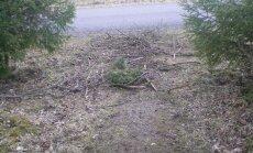 FOTO: Naabrinaine korjab igal aastal kraavist puuoksi ja viskab need kõnniteele