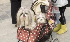 Sinna koerad reisiksid! Vaata, kuidas jaapanlased oma lemmikuid poputavad!
