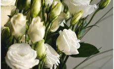 Muuseum otsib avaliku pulma jaoks sobivat pruutpaari