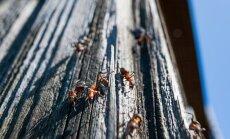 Näpunäited, kuidas saada lahti sipelgatest