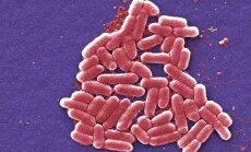 Röövbakterid hävitavad tõhusalt ravimresistentseid mikroobe