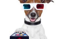 Vaata järgi! Käivitus uus lemmikloomade veebiportaal PetID