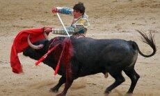 Да будет кровь! В Каталонии снова разрешили корриду