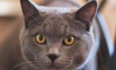 Põnevad loomad: 11 kummalist fakti kasside kohta, mida sa varem ei teadnud