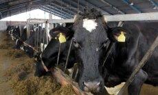 Võhmanõmme põllumajandusühistu likvideerib piimakarja