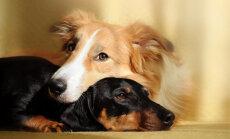 Uus-Meremaa loomakaitseseaduse uuendus: kõik loomad on tundlikud olendid!