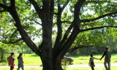 Leili metsalood: Vana puu ja uued inimesed