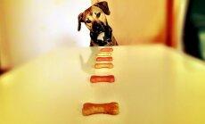 Koer tundub alati näljane? 5 moodust, et koeral oleks kõht täis