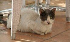 Kass Kosi saarel Kreekas.
