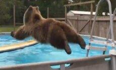 VIDEO: Lõbus! Karu surfilaual näitab, kuidas kuumal suvepäeval ennast jahutada tuleb!