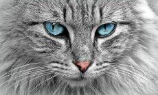 Huvitav fakt: meie armsad kassid on paljude liikide väljasuremise eest vastutavad