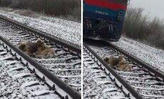 Imeline lugu: vapper koer kaitses 2 ööpäeva oma haavatud sõpra, kes ei saanud raudteerööbastelt liikuva rongi eest põgeneda