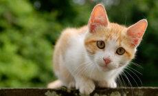Niimoodi teed koduse treeningu kassile lõbusaks ja naudid seda ka ise