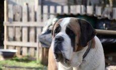VAATA: kuidas möödus uute sõprade Anu ja koer Akseli esimene aasta?
