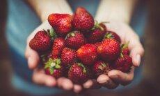 Vegansõda: kas veganlus sobib lastele? Eesti ja Soome meditsiinitöötajad on eri meelt