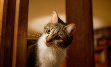 Kas kassid tõesti armastavad jäätist? Mõned põnevad faktid kasside maitsemeele kohta