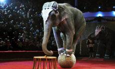 В Ирландии и Италии перестанут использовать зверей в цирках