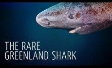 Vetevalla kauakestvad: teadlased hindavad grööni haide elueaks kuni 400 aastat